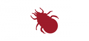 facts about red mite