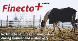 finecto-succesvol-treatment-for-lice-and-mosquitoes-on-horses-600x314