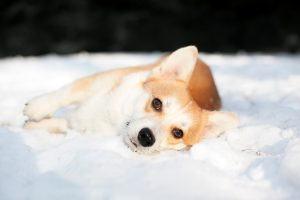Can dogs also get fleas in winter?