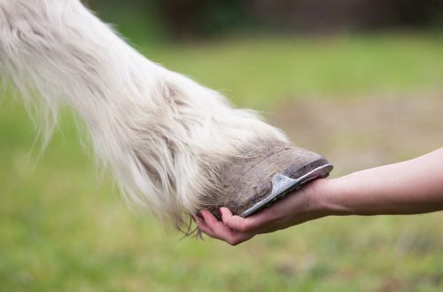 Why there's no quick fix for mite infection in horses