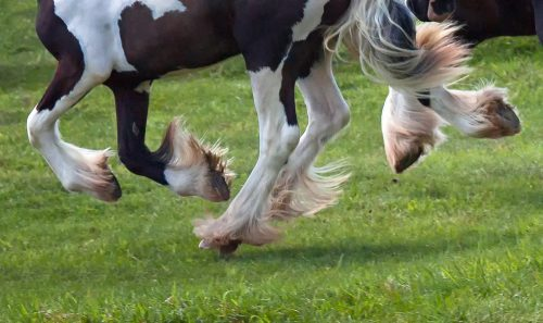 Lice in horses