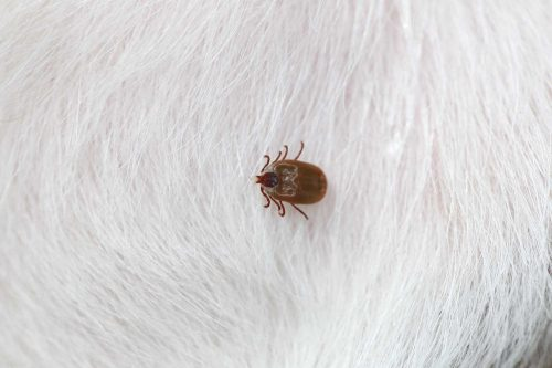 How does Finecto+ Dog work against ticks?