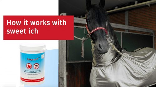 How does Finecto+ Horse work for horses with sweet itch?
