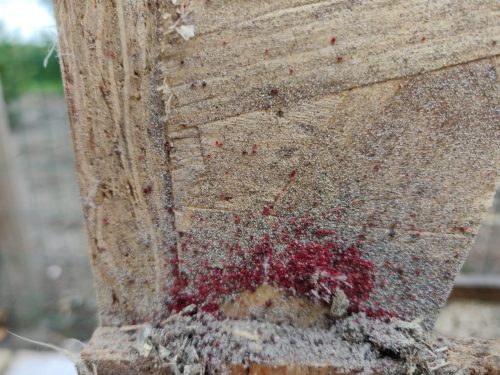 8 common red mite treatment mistakes