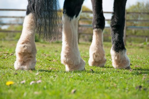 Did your horse have mites last year? There are probably still eggs present!
