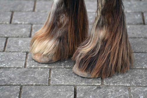 What is the difference between chemical and natural treatment against mites in horses?