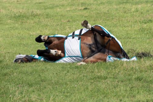 Sweet itch horse? Then start taking these steps now!